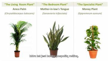rosliny oczyszczaja powietrze